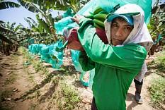 Fairtrade-Umsatz steigt weiter