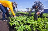 Schweiz entwickelt Bio und Fairtrade in Nicaragua
