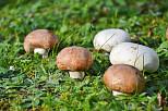 Ernährungswunder Pilze