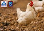 Aldi unterstützt Europäische Masthuhn-Initiative