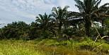 Coop startet Palmöl-Offensive