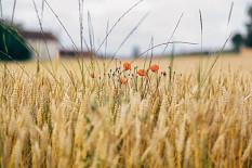 BÖLW kommentiert die Gemeinsame EU-Agrarpolitik