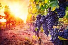 Qualität von Naturweinen überzeugt