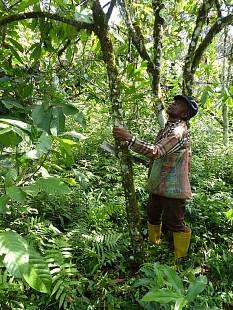 Naturland fordert faire Preise für Kakaobauern