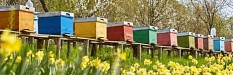 Neonicotinoide: Risiken für Bienen bestätigt