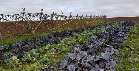 Biozyklisch-veganer Landbau