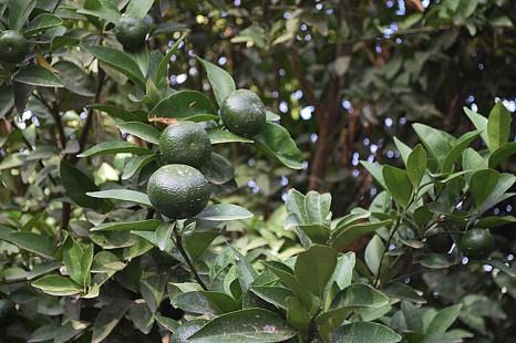 Mandarinen und besonderes Gemüse in Bio-Qualität