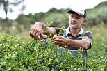 Erstes Acerola-Pulver mit Bio- und Fair-Trade-Zertifikat