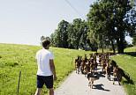 Bio in Bayern weiter ausgebaut