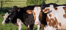 Ökologische Tierhaltung steigt stetig