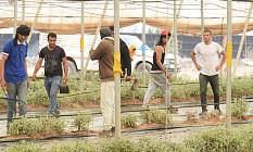 Bio-Kräuter aus Marokko