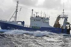 Naturland Seelachs aus der Nordsee