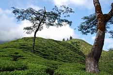 So schmeckt Nepal: TeeGschwendner präsentiert Himalaya Tees