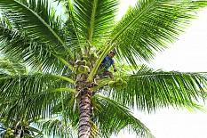 Bio-Kokosspezialitäten machen Karriere