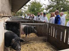 Bio-Schweinefleisch: Umstellen lohnt sich!