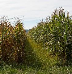 Ökologische Landwirtschaft schlägt konventionelle